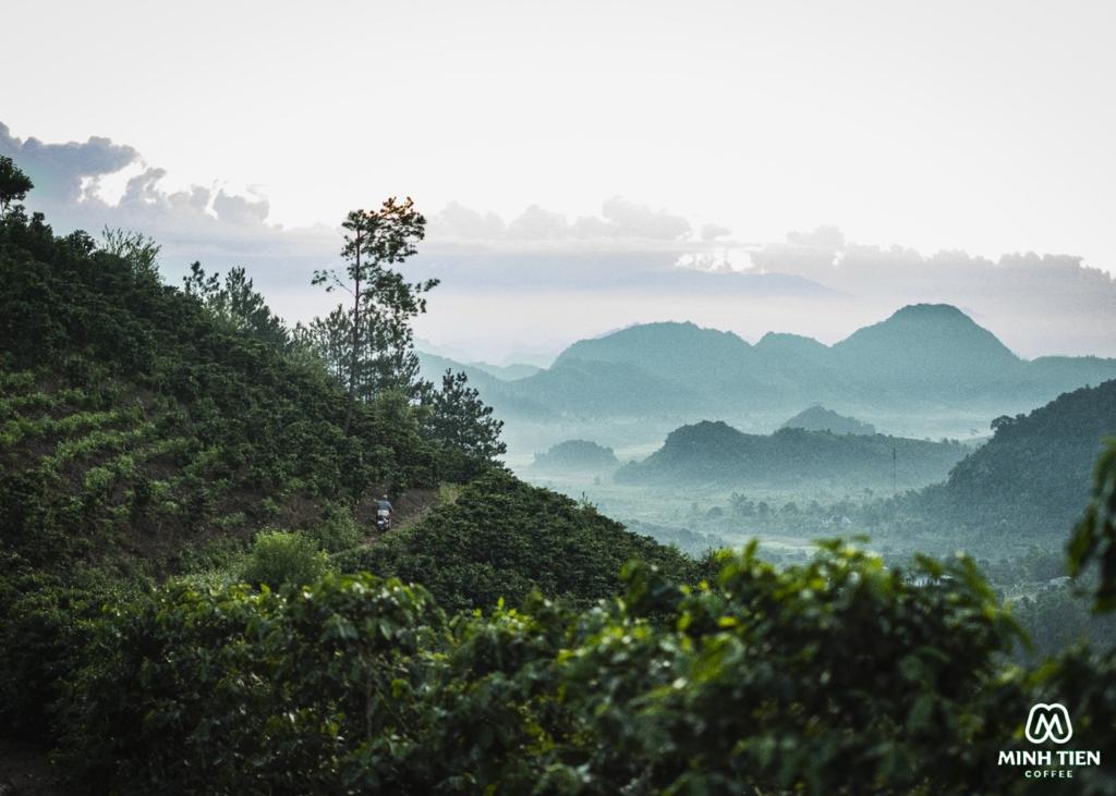 vùng trồng cà phê