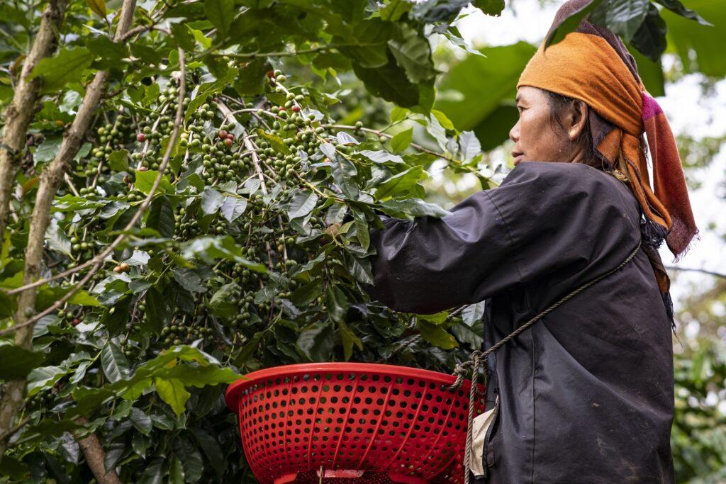 cà phê bền vững