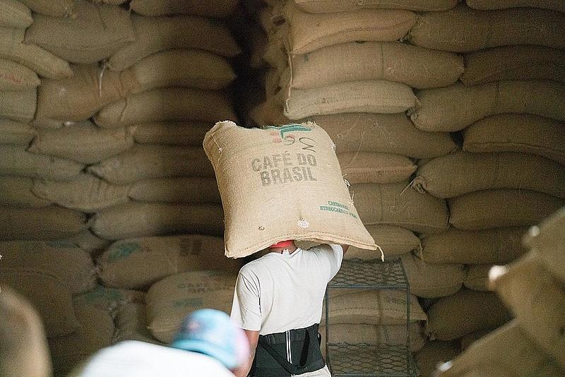 thu hoạch cà phê tại brazil